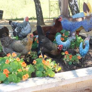 Millicent, Hyacinth, Winifred, Henrietta